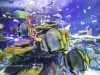 ripleys-aquarium-rainbow-reef